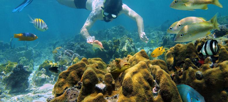 Jungle Tour Cancun